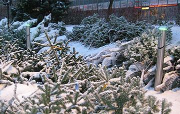Ladestasjon med juletrær